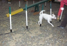 alberts-first-agility