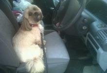 driving-miss-daisy