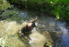 dylan-splashing-in-the-stream