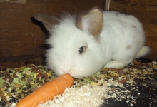 fluffy-loves-carrots