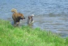 gem-and-riddick-loving-swimming-in-the-lake