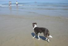 gemma-stroling-along-the-beach