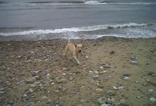 homer-at-the-beach