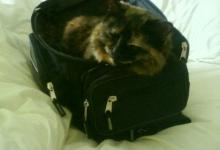 obi-loves-bags