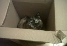 obis-box
