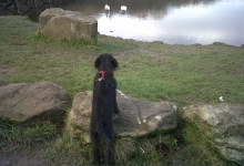 ronnie-watching-the-ducks