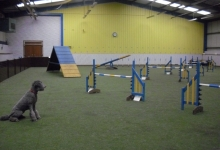 the-dog-house-agility-arena