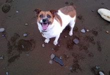 tilly-on-the-beach